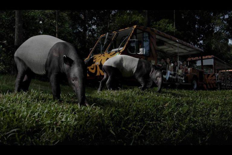 dinner-and-night-safari-evening-tour